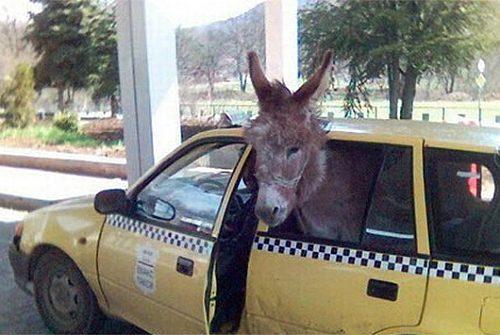 Cele mai bune glume cu taximetristi