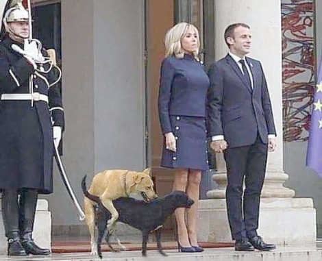 presedintele Frantei si cainii vagabonti